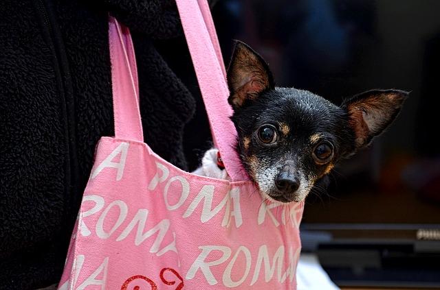 růžová taška, pes