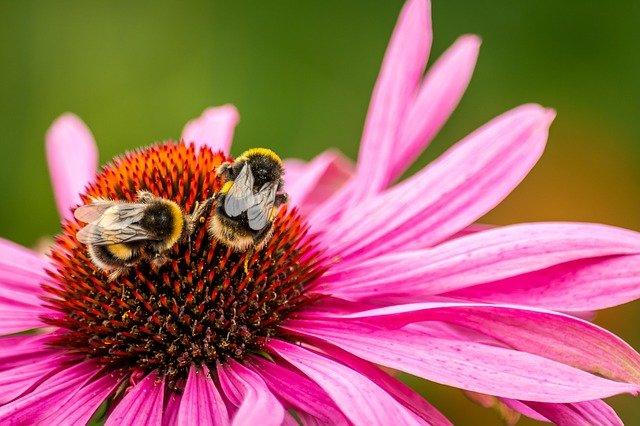 včely na květině